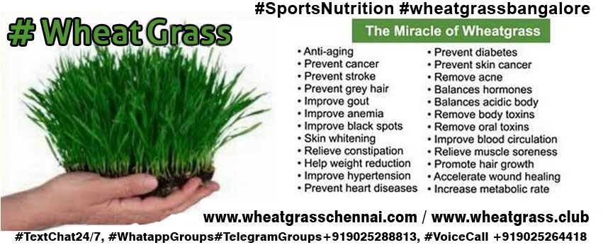 Wheatgrass powder benefits weight loss